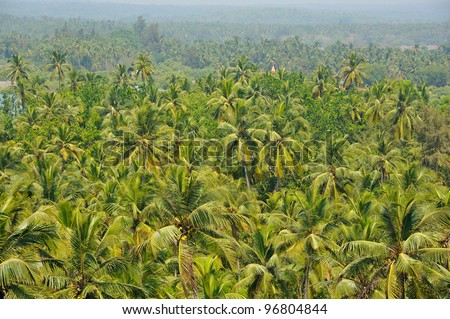 Background with tropical plants - stock photo