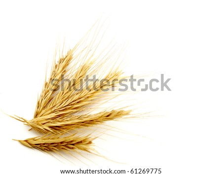 Background with wheat - stock photo