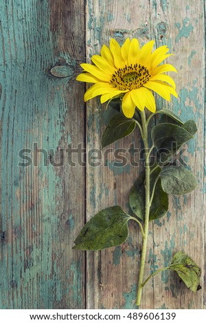 Background Bouquet Yellow Sunflowers On White Stock Photo