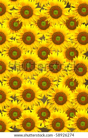 background with yellow sunflowers life