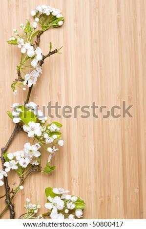 Background wood spring flower - stock photo