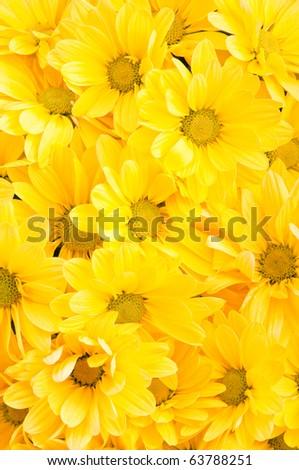 background yellow flowers - stock photo