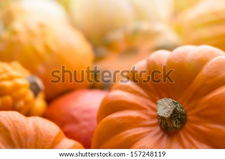 Backgrounds and textures: a lot of multicolor pumpkins, seasonal autumn decorative background - stock photo