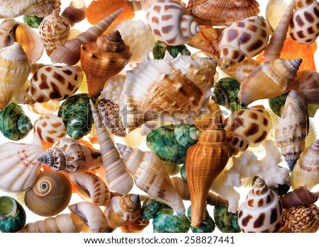 Backgrounds and textures: mix of assorted seashells - stock photo