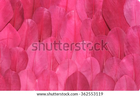 Backgrounds of birds feathers. Tribal animal background texture