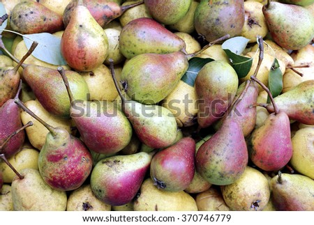 Backgrounds of many ripe juicy yellow and red pears - stock photo