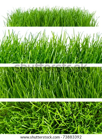 backgrounds of spring grass isolated - stock photo