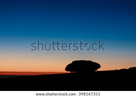 Backlight Tree Silhouette - stock photo