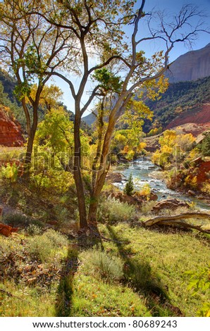 Backlighted autumn cottonwoods in Zion National Park, along the Virgin River - stock photo