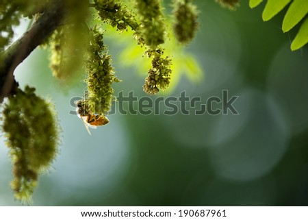 Backlit Bee collecting pollen�