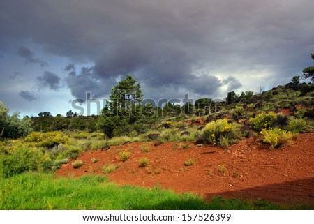 Backlit desert landscape, junipers, snags and scrub brush, Torrey,Utah  - stock photo