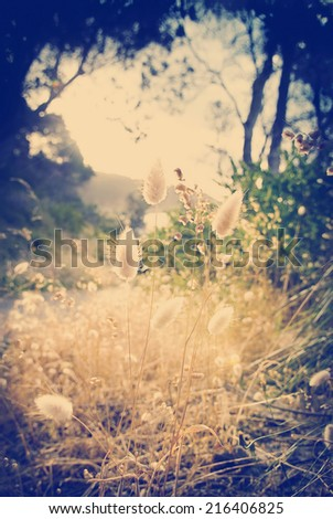 Backlit grasses glow under a canopy of dark trees with Instagram style filter - stock photo
