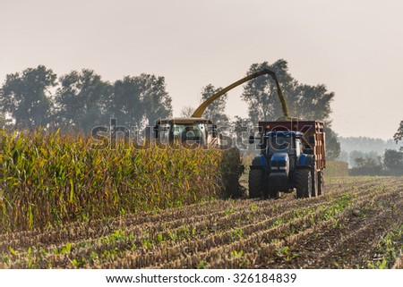 Backlit image of mechanical harvesting of organic cultivated fodder maize plants at the end of a sunny day in the beginning of the autumn season. - stock photo