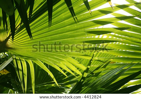 Backlit jungle palm leaves as an abstract background