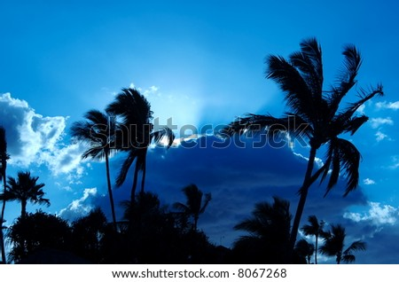 Backlit palm trees at sunset - stock photo