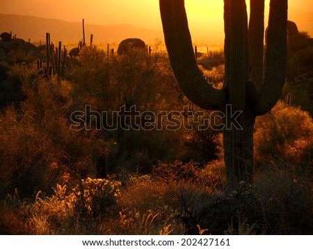 Backlit saguaros with sun on horizon - stock photo