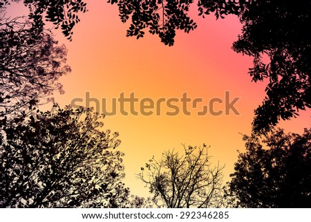 Backlit trees and branches in retro style for Abstract background.  - stock photo