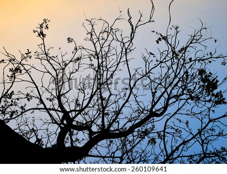 Backlit trees and branches on evening time - stock photo