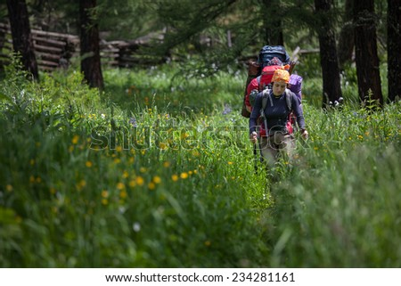 Backpackers are walking in high green grass in forest  of Altai mountains in Siberia - stock photo