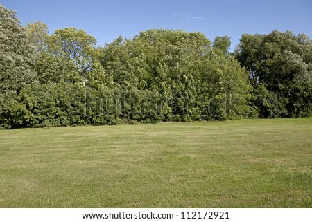 Backyard lawn surrounded by trees - stock photo