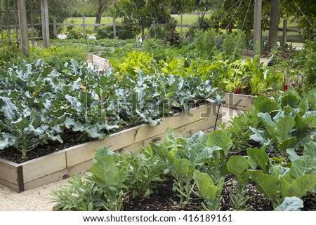 Backyard Vegetable Garden - stock photo