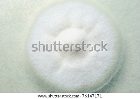 Bacteria, yeast and mold growing on an agar plate. - stock photo