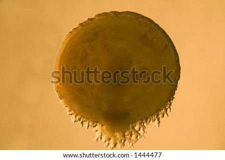 bacterial growth 4 - stock photo