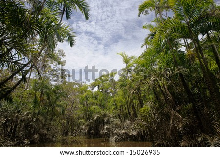 Bactris palms growing at the edge of an Amazonian oxbow lake - stock photo