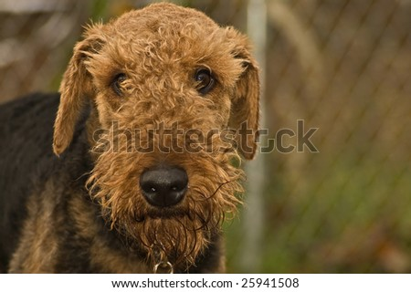Bad dog - stock photo