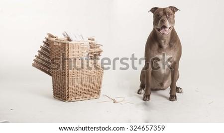 Bad dog - stock photo