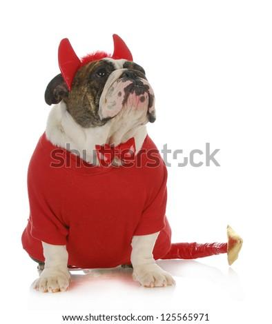 bad dog  - english bulldog dressed up like a devil looking up isolated on white background - stock photo