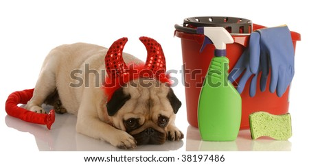 bad dog - pug dressed as devil laying beside cleaning supplies - stock photo