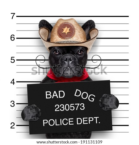 bad mexican dog in a police mugshot - stock photo