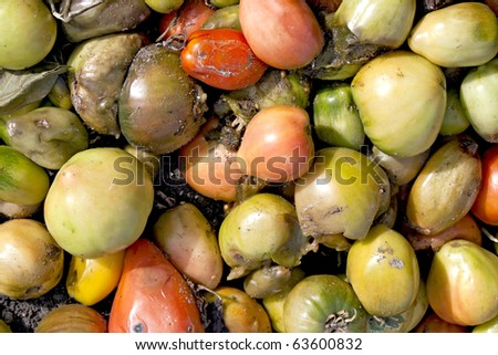 Bad tomato green and red as background - stock photo