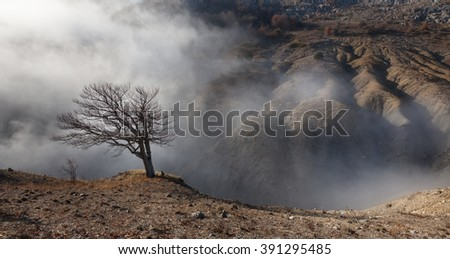 Badland. Lone tree on the edge of a ravine in the fog - stock photo
