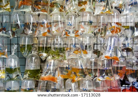 Bags of goldfish for sale at a market - stock photo