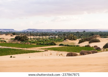 Bahariya Oasis, Egypt - stock photo