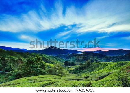 Bahrat Tea Plantation in Cameron Highland, Malaysia - stock photo