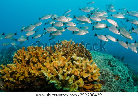 baja reef fishes - stock photo