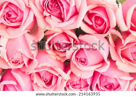 bakcground of bouquet of pink blooming  roses  - stock photo