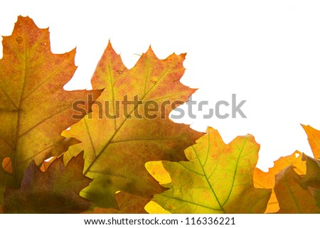 Bakground made of autumn brown and orange leaves - stock photo