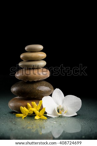balancing pebble stones and white flower orchid with water drop, ZEN stone, on black background, spa tranquil scene concept with reflection - stock photo
