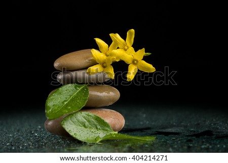 balancing pebble stones and yellow flower with water drop, ZEN stone, on black background, spa tranquil scene concept with reflection