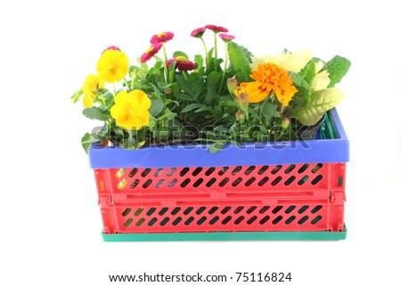 Balcony plants in a folding box on a white background