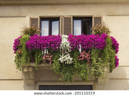 balcony twined with flowers of petunias on facade of the house on the Piazza Navona, Rome, Italy - stock photo