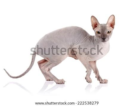 scratching a cat's back
