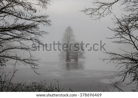 Bald Cypress trees frozen in ice and framed by branches on a foggy morning at Stumpy Lake in Virginia Beach, Virginia.   - stock photo