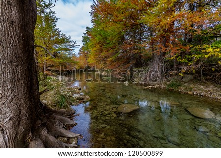 Bald Cypress Trees with Stunning Fall Color Lining a Crystal Clear Texas Hill Country Stream. - stock photo