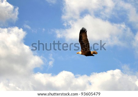 Bald Eagle flying in a cloudy sky. - stock photo
