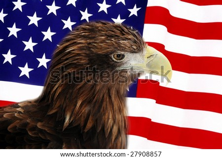 Bald Eagle in guarding American Flag
